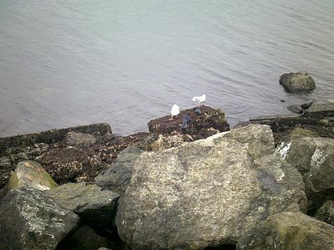 seagulls on rocks at beach