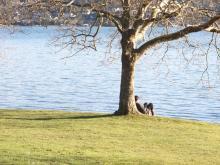 Man Under Tree