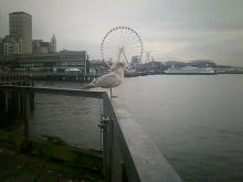 seagull perched on railing on Seattle waterfront